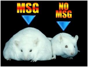 MSG the Silent Killer