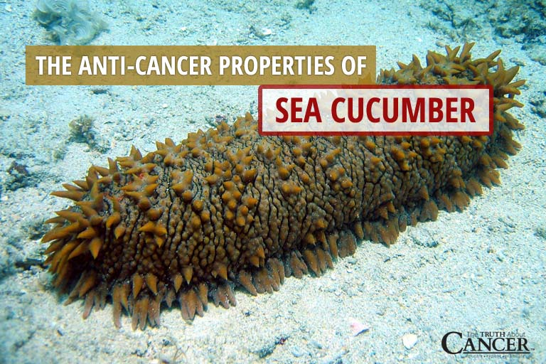 sea cucumber essay View sea cucumber research papers on academiaedu for free.