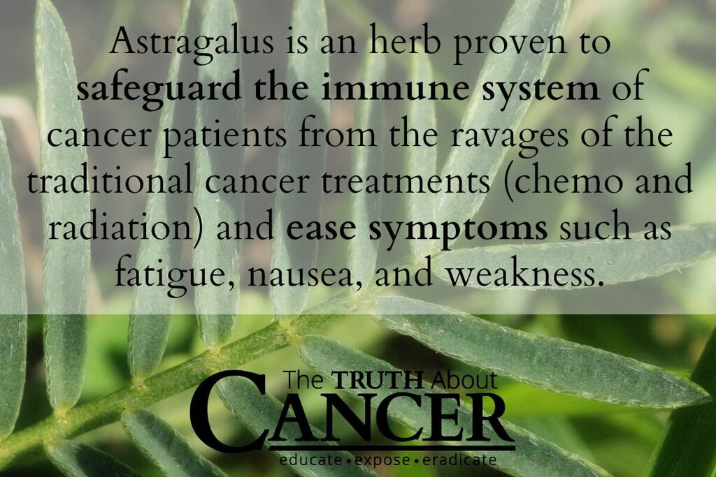 Astragalus is a herb proven to safeguard the immune system.