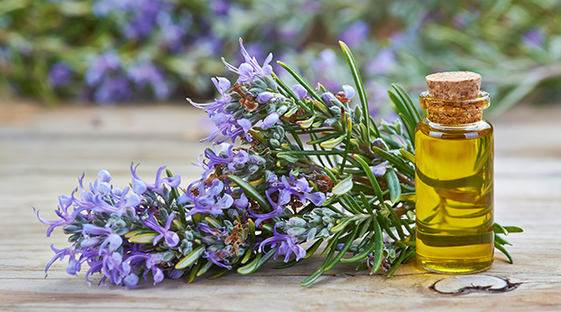 Image result for rosemary essential oil