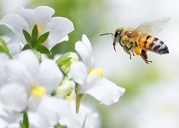 Royal jelly is produced by worker bees to feed bee larvae and is rich in amino acids