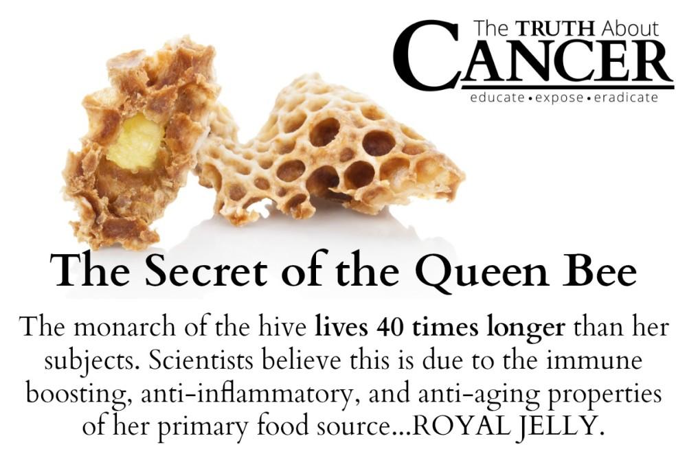 Secret Queen Bee Cancer