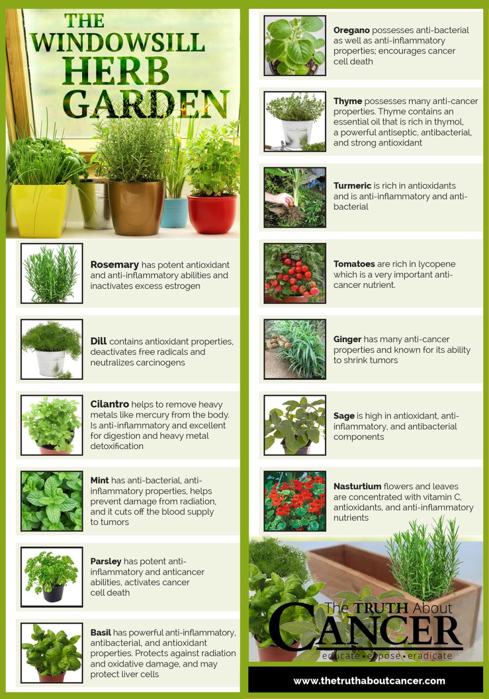 14 Cancer Fighting Plants for Your Indoor Herb Garden