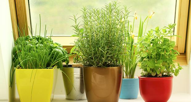 14 CancerFighting Plants for Your Indoor Herb Garden – Herb Garden Plants